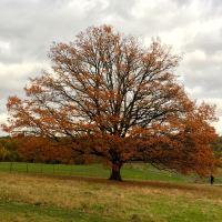 14-acorns-tree
