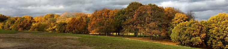 14-acorns-treescape